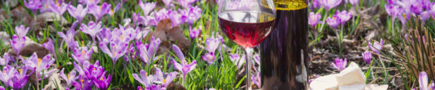 Glass of red wine with flower aroma, camembert cheese. Romantic dinner outdoors among spring crocuses in the forest